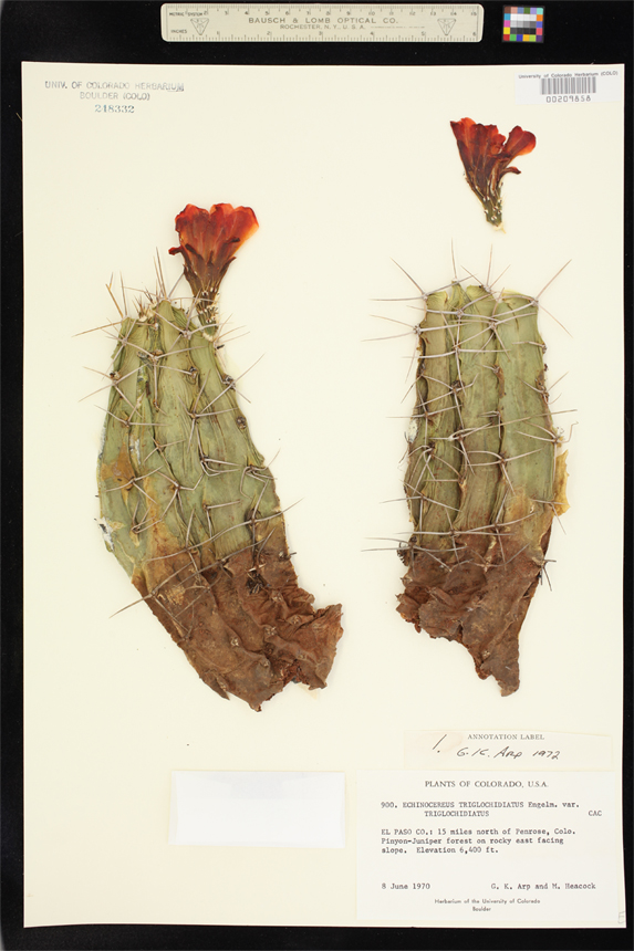 Specimens in the Herbarium
