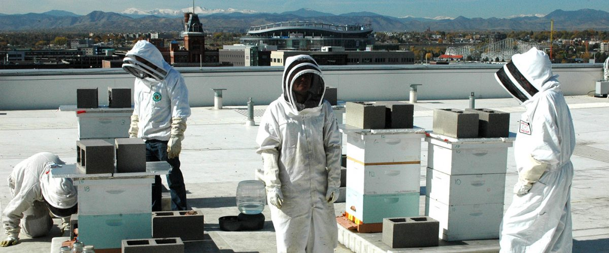The bee research team, which is made up of faculty members as well as undergraduate and graduate students, is maintaining five beehives atop the Student Commons Building.