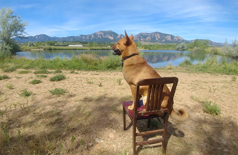 Hazel enjoying a rest at the CU Boulder South property