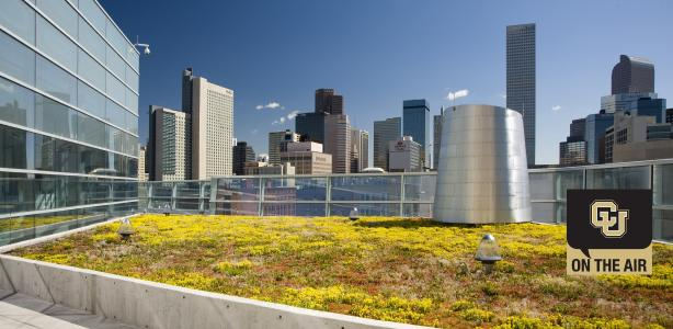 Denver's rooftops are going green: What does it mean?