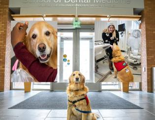 Stressed About the Dentist? Paws for a Smile Instead