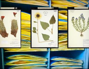 Herbarium COLO a library of botanical DNA