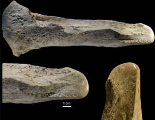 Ancient humans turned elephant remains into a surprising array of bone tools