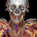 Virtual human — a living cadaver — pushes boundaries of anatomical science