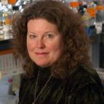 Leinwand wins American Heart Association Distinguished Scientist Award