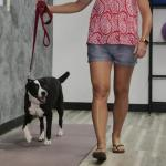 New gene-therapy eases chronic pain in dogs; human trials underway