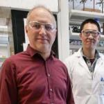 Specific UV light wavelength could offer low-cost, safe way to curb COVID-19 spread