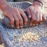 Experts to convene Grain School on campus