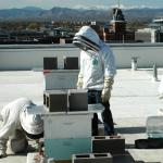 Researchers abuzz about bee health