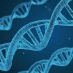 New method developed to detect and adjust population structure in genetic summary data