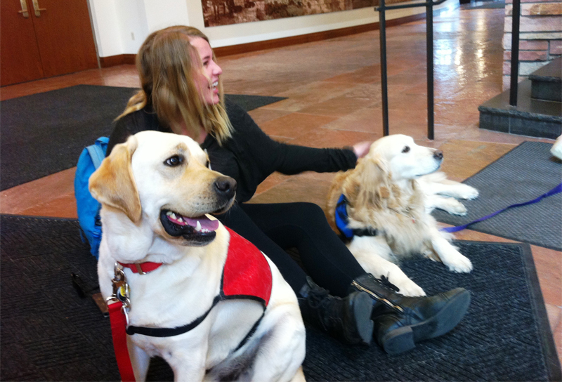 Therapy dogs take some of the bark and bite out of finals week